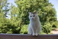 Katze Alice auf dem Reiterhof Bartel_1