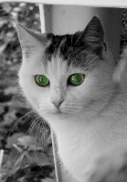 Katze Alice auf dem Reiterhof Bartel_3