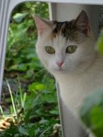 Katze Alice auf dem Reiterhof Bartel_4