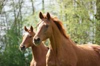 Pferd Astonia auf dem Reiterhof Bartel_1