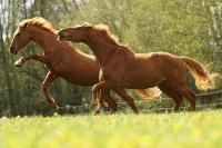 Pferd Astonia auf dem Reiterhof Bartel_2