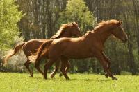 Pferd Astonia auf dem Reiterhof Bartel_3