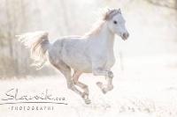 Pony Hermine auf dem Reiterhof Bartel_1