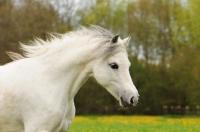 Pony Hermine auf dem Reiterhof Bartel_2