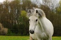 Pony Hermine auf dem Reiterhof Bartel_3