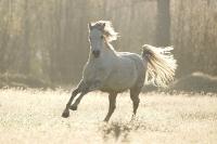 Pony Hermine auf dem Reiterhof Bartel_4