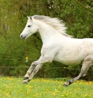 Pony Hermine auf dem Reiterhof Bartel_6