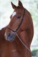 Pferd Lago auf dem Reiterhof Bartel_3
