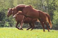 Pferd Lago auf dem Reiterhof Bartel_5