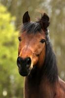 Pferd Lennox auf dem Reiterhof Bartel_10