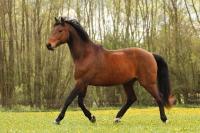 Pferd Lennox auf dem Reiterhof Bartel_3