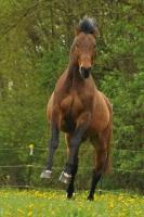 Pferd Lennox auf dem Reiterhof Bartel_4