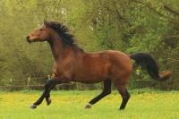 Pferd Lennox auf dem Reiterhof Bartel_5