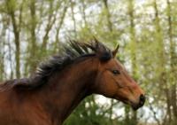 Pferd Lennox auf dem Reiterhof Bartel_8