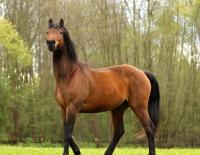 Pferd Lennox auf dem Reiterhof Bartel_9