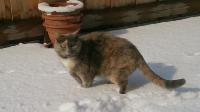 Katze Minerva auf dem Reiterhof Bartel_1