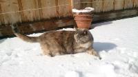 Katze Minerva auf dem Reiterhof Bartel_2