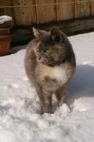 Katze Minerva auf dem Reiterhof Bartel_3
