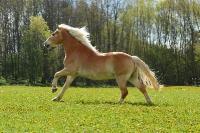 Pony Paul auf dem Reiterhof Bartel_2