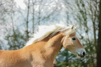 Pony Paul auf dem Reiterhof Bartel_3