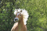 Pony Paul auf dem Reiterhof Bartel_5