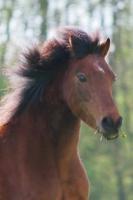 Pony Picco auf dem Reiterhof Bartel_1
