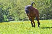 Pony Picco auf dem Reiterhof Bartel_2