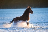 Pony Picco auf dem Reiterhof Bartel_4