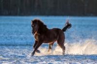 Pony Picco auf dem Reiterhof Bartel_5