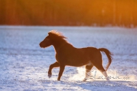 Pony Picco auf dem Reiterhof Bartel_6