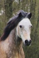 Pferd Rebell auf dem Reiterhof Bartel_1
