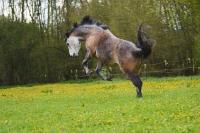 Pferd Rebell auf dem Reiterhof Bartel_2