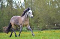 Pferd Rebell auf dem Reiterhof Bartel_3