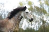 Pferd Rebell auf dem Reiterhof Bartel_4