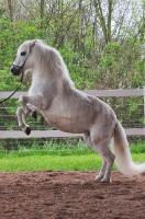 Pony Tiffi auf dem Reiterhof Bartel_1