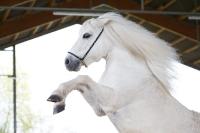Pony Tiffi auf dem Reiterhof Bartel_3