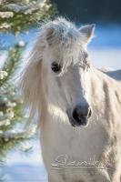 Pony Tiffi auf dem Reiterhof Bartel_6