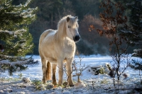 Pony Tiffi auf dem Reiterhof Bartel_7