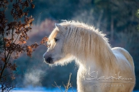 Pony Tiffi auf dem Reiterhof Bartel_8