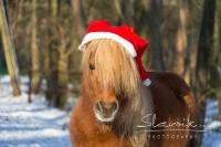 Pony Tom auf dem Reiterhof Bartel_1