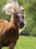 Pony Tom auf dem Reiterhof Bartel_3