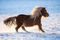 Pony Tom auf dem Reiterhof Bartel_4