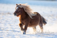 Pony Tom auf dem Reiterhof Bartel_5