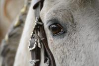 Pferd Valoroso auf dem Reiterhof Bartel_1