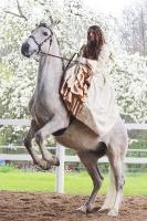 Pferd Valoroso auf dem Reiterhof Bartel_6